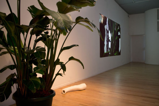 Abbas Akhavan, Installation view of green house, 2013 (from left: Consort, bird of paradise plant; Tame, plaster, fabric; Crew, video projection)