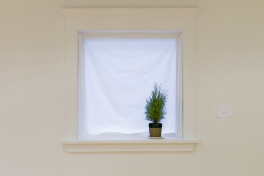 Juliette Blightman, Berlin (2018), cotton sheet, potted plant, dimensions variable, Western Front, 2018. Curated by Jacob Korczynski. Photo courtesy of Dennis Ha. Work courtesy of the artist and Galerie Isabella Bortolozzi.