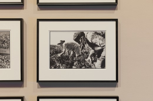 Craig Berggold, A Time to Change, 1984, 17.1 x 25.1cm, b/w 35mm photographs. Courtesy Simon Fraser University Library Special Collections and Rare Books, Canadian Farmworkers Union Fonds. Photo: Dennis Ha.